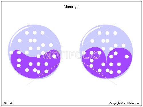 Monocyte,