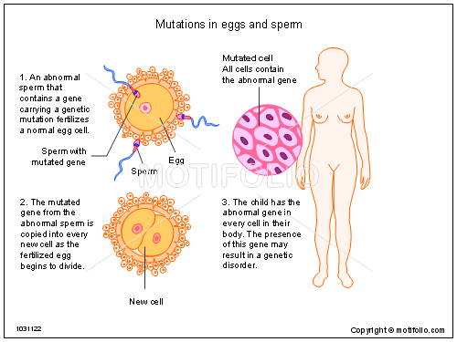 Mutations in eggs and sperm, PPT PowerPoint drawing diagrams, templates, images, slides