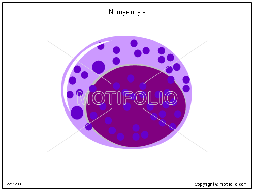 N myelocyte, PPT PowerPoint drawing diagrams, templates, images, slides