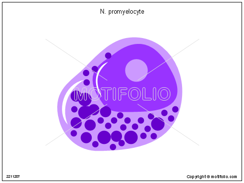 N promyelocyte, PPT PowerPoint drawing diagrams, templates, images, slides
