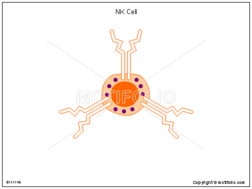 NK Cell, PPT PowerPoint drawing diagrams, templates, images, slides