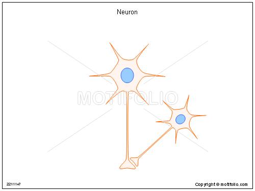 Neuron,