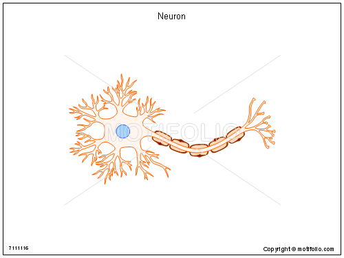 Neuron, PPT PowerPoint drawing diagrams, templates, images, slides