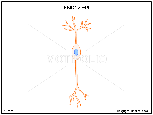 Neuron bipolar, PPT PowerPoint drawing diagrams, templates, images, slides