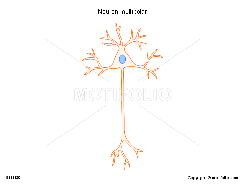 Neuron multipolar, PPT PowerPoint drawing diagrams, templates, images, slides