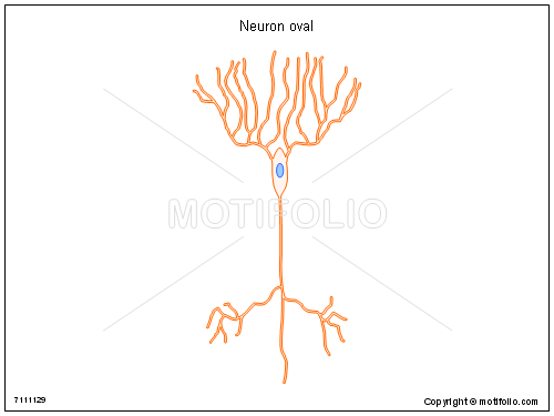 Neuron oval, PPT PowerPoint drawing diagrams, templates, images, slides
