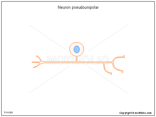 Neuron pseudounipolar, PPT PowerPoint drawing diagrams, templates, images, slides
