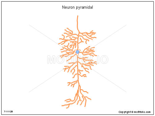 Neuron pyramidal, PPT PowerPoint drawing diagrams, templates, images, slides