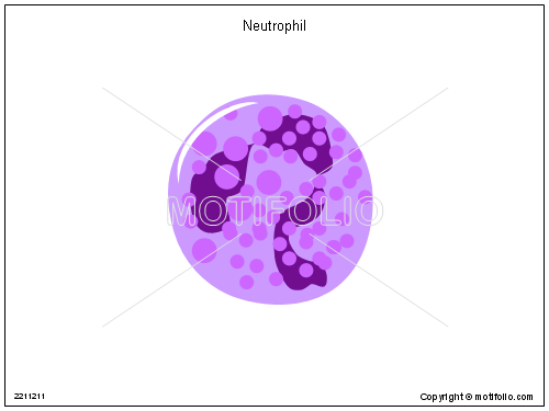 Neutrophil, PPT PowerPoint drawing diagrams, templates, images, slides
