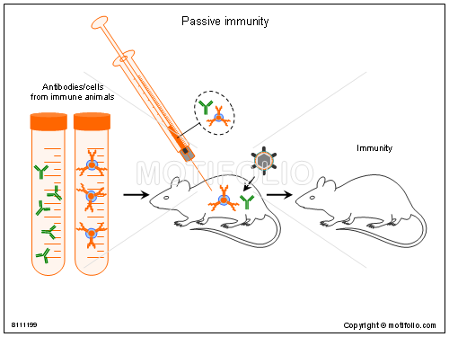 Passive immunity, PPT PowerPoint drawing diagrams, templates, images, slides