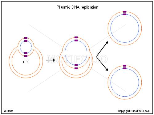 Plasmid Dna Replication Illustrations