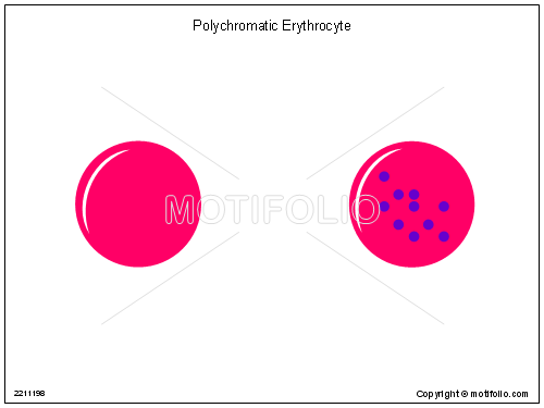 Polychromatic Erythrocyte; Reticulocyte, PPT PowerPoint drawing diagrams, templates, images, slides