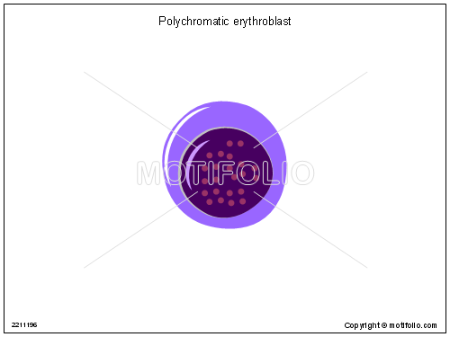 Polychromatic erythroblast, PPT PowerPoint drawing diagrams, templates, images, slides