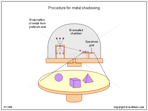 Procedure for metal shadowing, PPT PowerPoint drawing diagrams, templates, images, slides