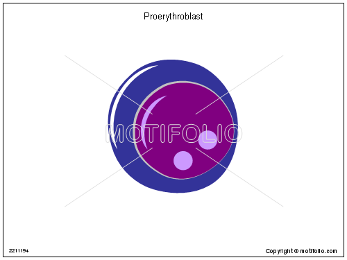 Proerythroblast; Pronormblast, PPT PowerPoint drawing diagrams, templates, images, slides