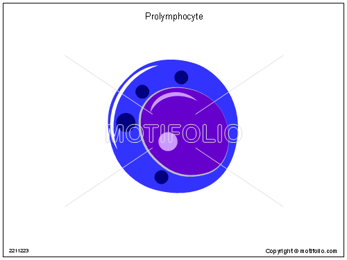 Prolymphocyte, PPT PowerPoint drawing diagrams, templates, images, slides