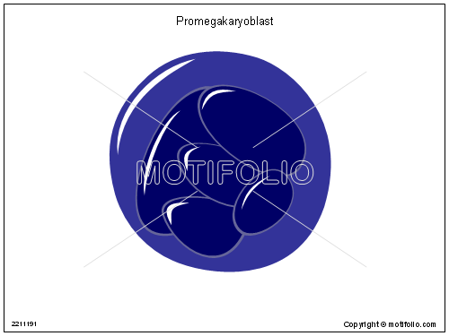 Promegakaryoblast, PPT PowerPoint drawing diagrams, templates, images, slides