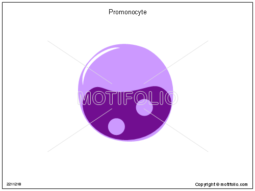 Promonocyte, PPT PowerPoint drawing diagrams, templates, images, slides