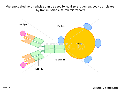 Protein coated gold particles can be used to localize antigen-antibody complexes by transmission electron microscopy, PPT PowerPoint drawing diagrams, templates, images, slides