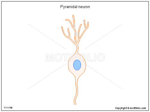 Pyramidal neuron, PPT PowerPoint drawing diagrams, templates, images, slides