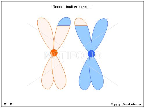 Recombination