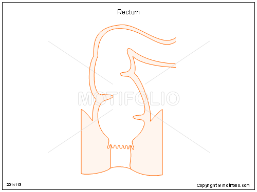 Rectum, PPT PowerPoint drawing diagrams, templates, images, slides
