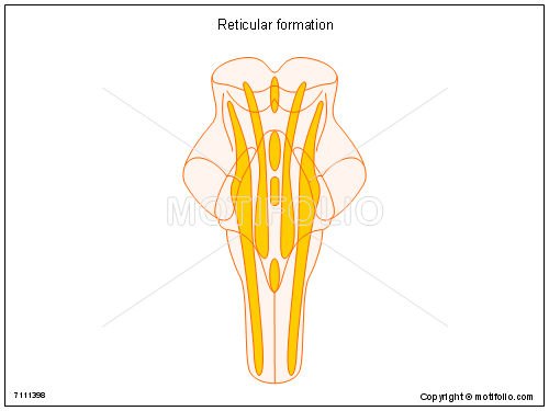 Reticular formation, PPT PowerPoint drawing diagrams, templates, images, slides