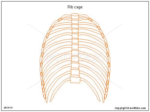 Rib cage PPT PowerPoint drawing diagrams, templates, images, slides