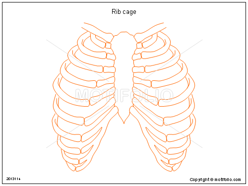 rib cage ppt powerpoint drawing diagrams templates images slides : rib cage diagram - findchart.co
