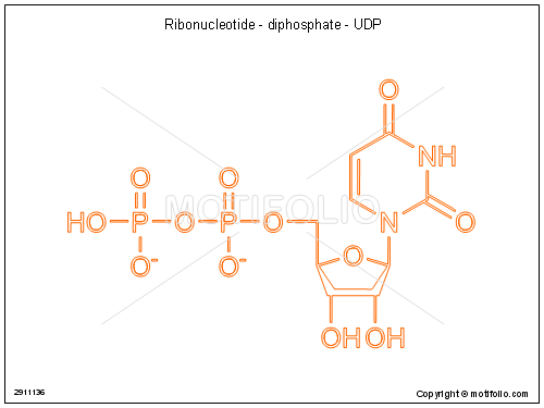 Ribonucleotide - diphosphate - UDP, PPT PowerPoint drawing diagrams, templates, images, slides