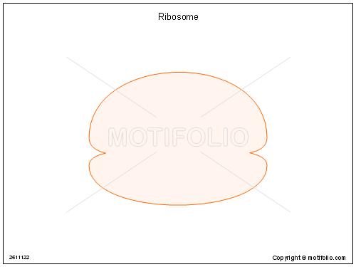 Ribosome,
