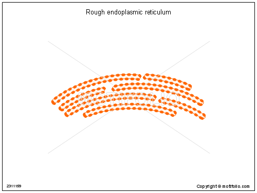 Drawing Smooth Lines In Powerpoint : Rough endoplasmic reticulum illustrations