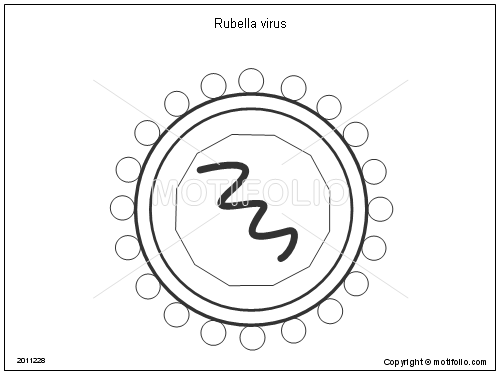 rubella virus illustrations