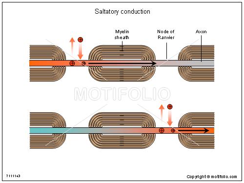 Saltatory