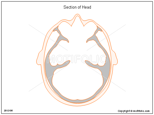 Section of Head, PPT PowerPoint drawing diagrams, templates, images, slides