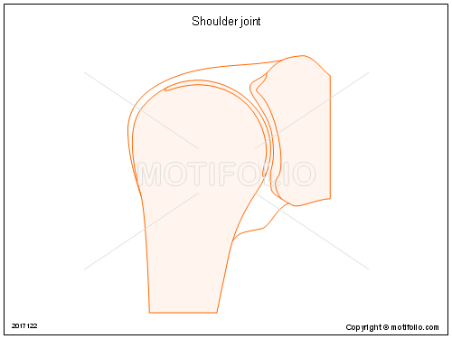 Shoulder joint, PPT PowerPoint drawing diagrams, templates, images, slides