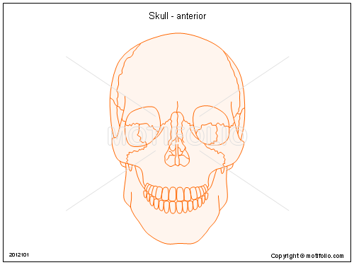 Skull - anterior, PPT PowerPoint drawing diagrams, templates, images, slides