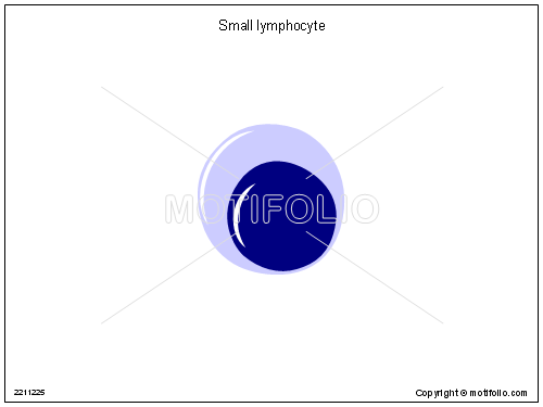 Small lymphocyte, PPT PowerPoint drawing diagrams, templates, images, slides