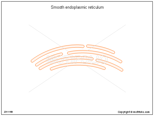 How To Smooth Drawing Lines In Photo : Smooth endoplasmic reticulum illustrations
