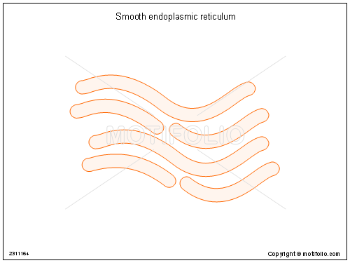 Drawing Smooth Lines In Powerpoint : Smooth endoplasmic reticulum illustrations