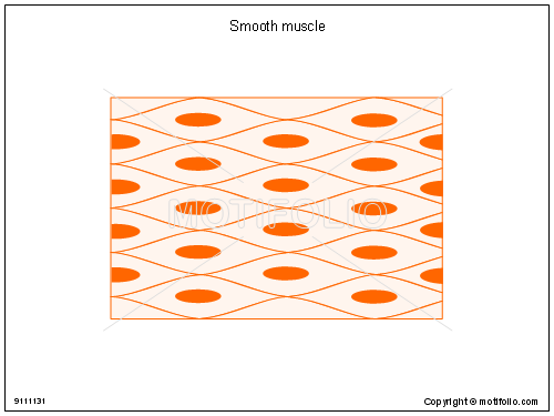 Smooth muscle, PPT PowerPoint drawing diagrams, templates, images, slides