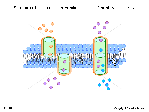 Structure of the helix and transmembrane channel formed by gramicidin A, PPT PowerPoint drawing diagrams, templates, images, slides