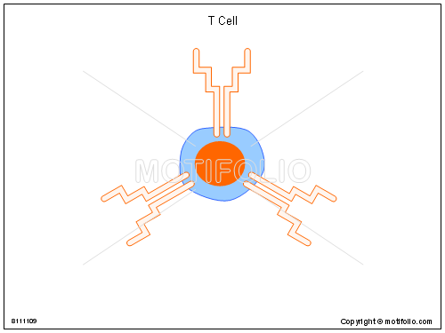 T Cell, PPT PowerPoint drawing diagrams, templates, images, slides