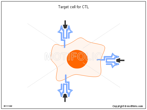 Target cell for CTL, PPT PowerPoint drawing diagrams, templates, images, slides