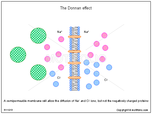 The Donnan effect, PPT PowerPoint drawing diagrams, templates, images, slides