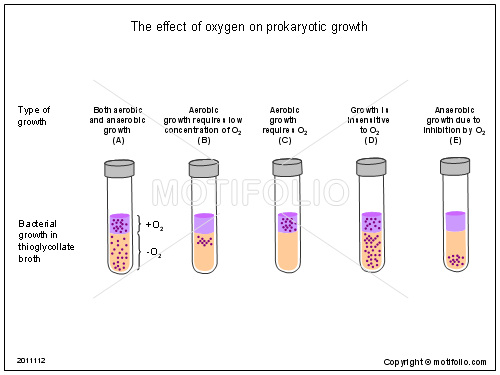 The effect of oxygen on prokaryotic growth, PPT PowerPoint drawing diagrams, templates, images, slides