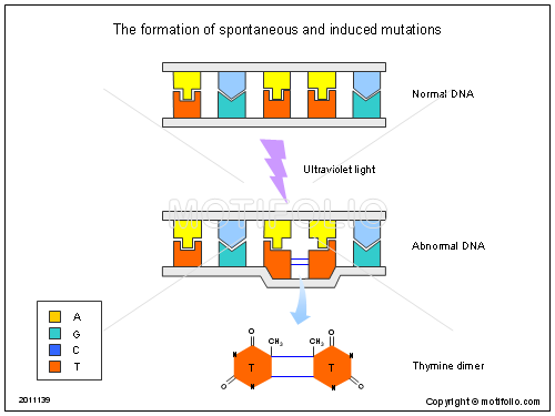 The formation of spontaneous and induced mutations, PPT PowerPoint drawing diagrams, templates, images, slides