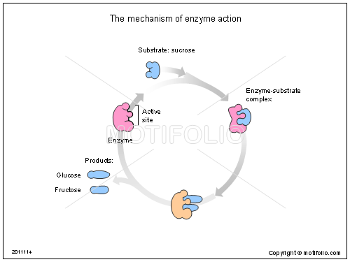 The mechanism of enzyme action, PPT PowerPoint drawing diagrams, templates, images, slides