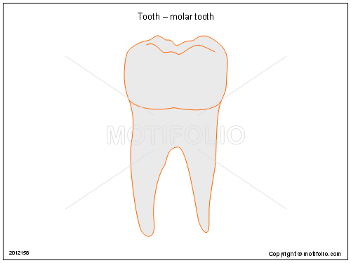 tooth molar tooth ppt powerpoint drawing diagrams templates  : molar diagram - findchart.co