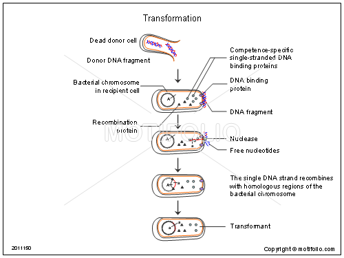 Transformation, PPT PowerPoint drawing diagrams, templates, images, slides